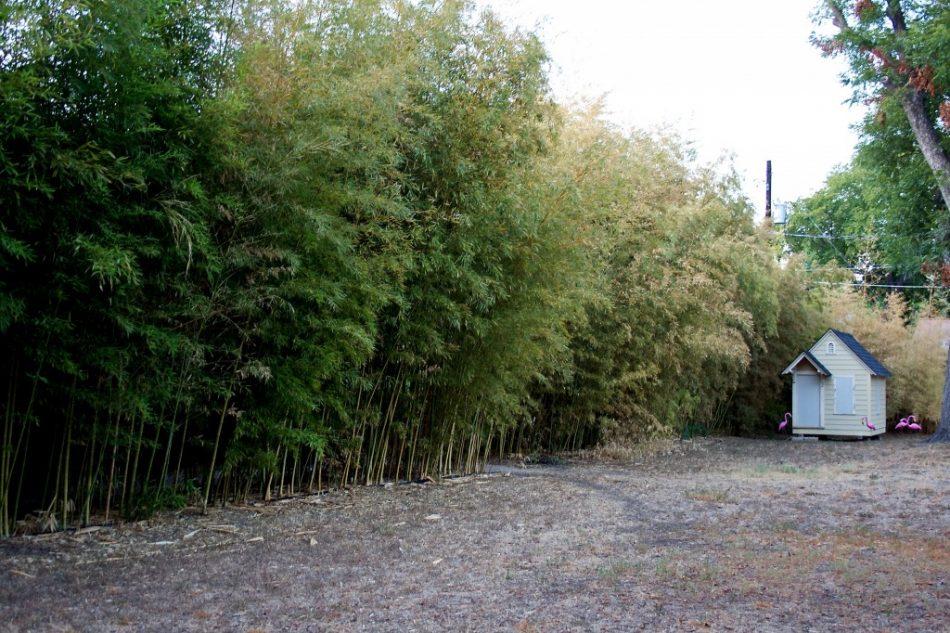 Bamboo Flamingoes