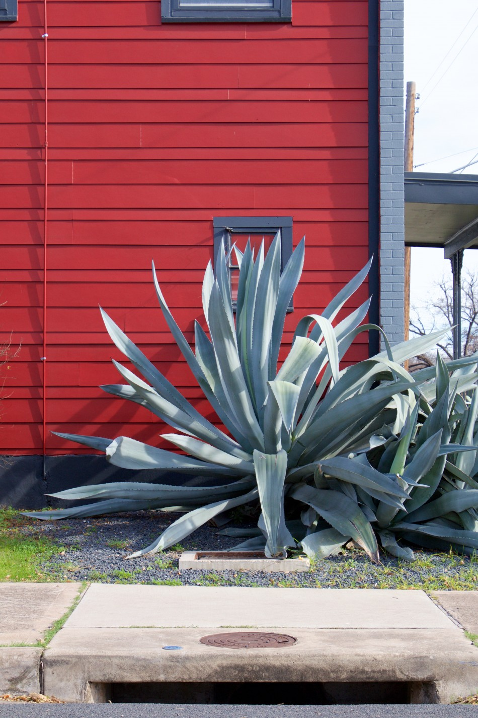 Agave and Red