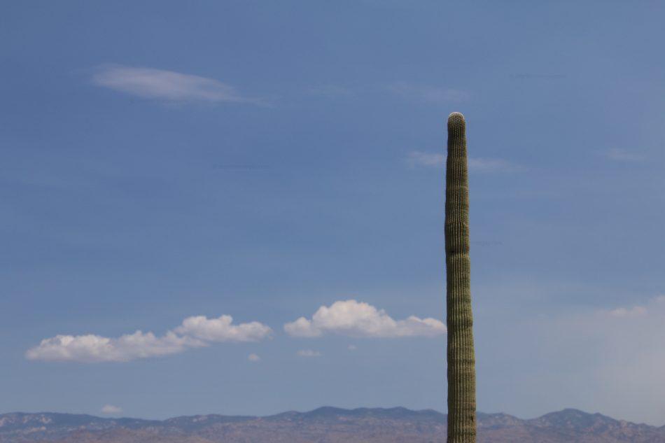 Minimal Saguaro