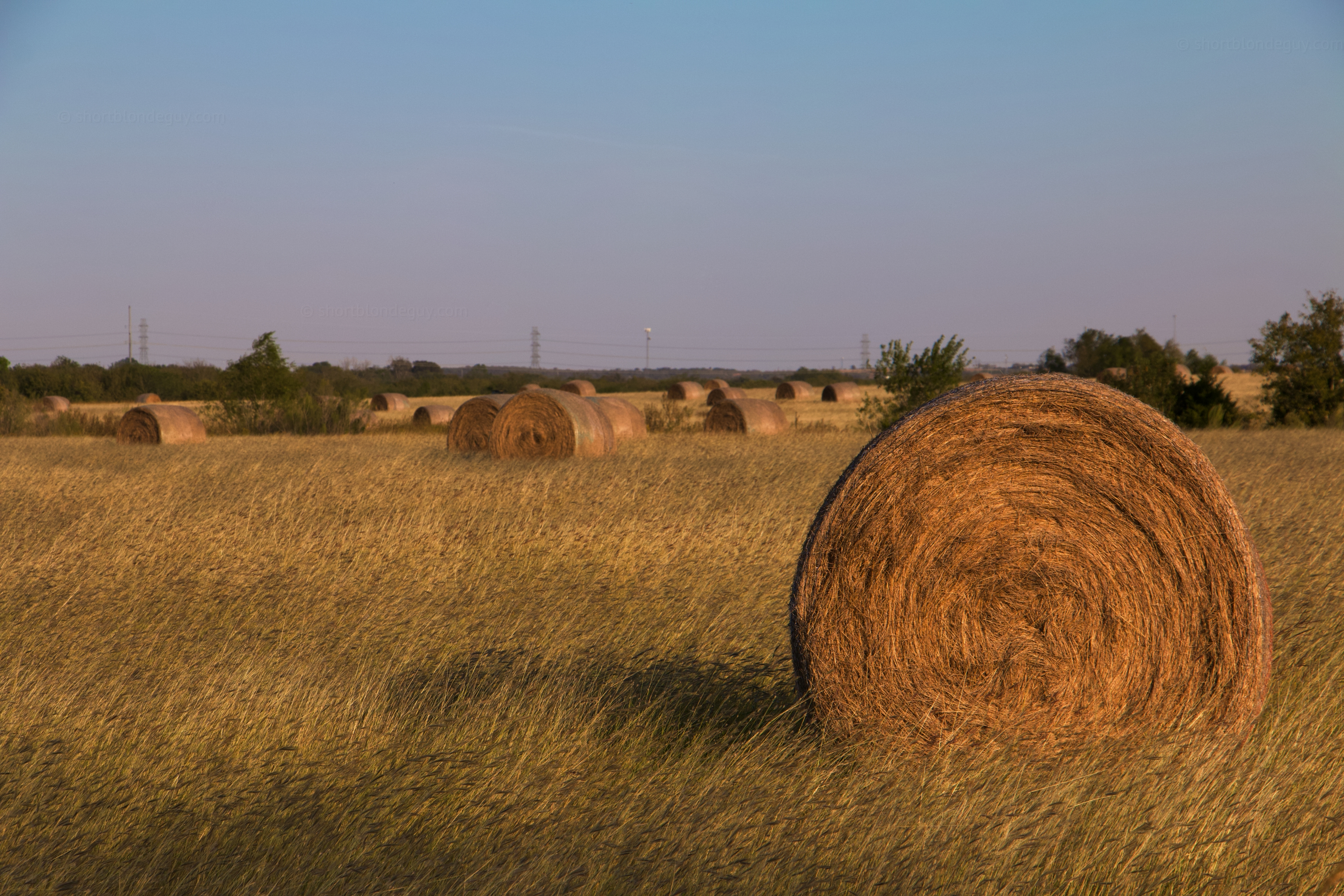 Hay, How Are You?